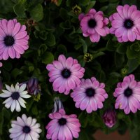 В октябре :: Виолетта