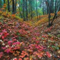Осенний этюд II :: Владимир Сковородников