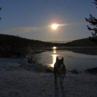 А не повыть ли на луну? :: Галина Полина