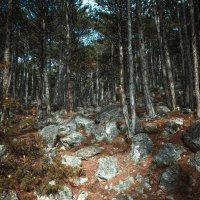 Каменный лес :: Елена Суксина