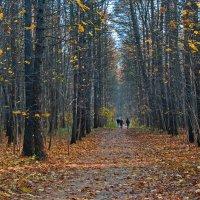 Осенью в парке :: Сергей Фомичев