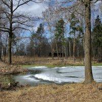 Природа в апреле. :: ТАТЬЯНА (tatik)