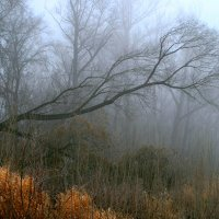 Осень скрылась под сенью тумана... :: Евгений Юрков