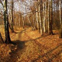 Ноябрь - это почти апрель! - DSC09232 :: Андрей Лукьянов