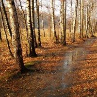 Ноябрь - это почти апрель! - DSC09245 :: Андрей Лукьянов