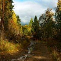 в лесу :: Ольга Cоломатина