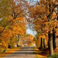Осенние краски :: Laimis S