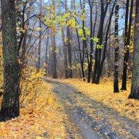 """""""Лес остыл и листья сбросил..."""" :: Лесо-Вед (Баранов)"""