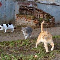 ребята с нашего двора... :: Галина Флора