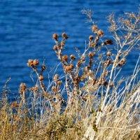 Осень на побережье :: Елена Нор