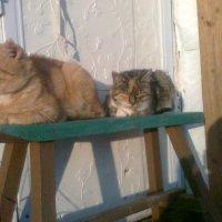 Мои кошки :: Виктор Елисеев
