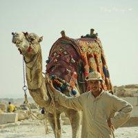 хозяин верблюда :: Алёна ChevyCherry