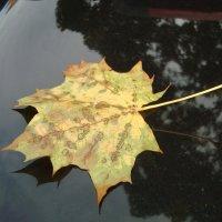 Осень :: Irina Fay