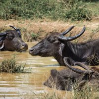 Сафари в национальном парке Удавалаве. :: Edward J.Berelet