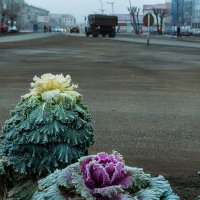 Зарисовка поздней осени :: Вадим Лячиков