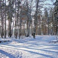 Березовый прозрачный лес :: Лидия (naum.lidiya)