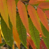 Осенние листья :: Elena TM
