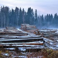 Подмосковные леса :: Андрей Куприянов