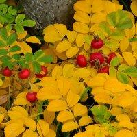 Кораллы для Осени :: Miola