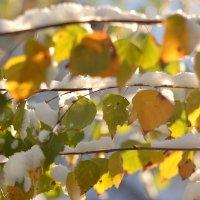 первый снег :: Dorosia