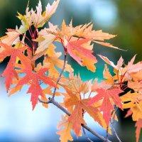 Осенние краски :: Николай Мухачев