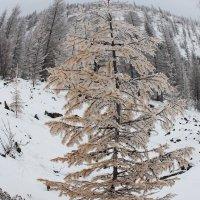 Зима в осеннем наряде :: Александр Велигура