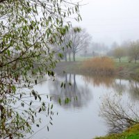 ноябрьский туман :: Елена