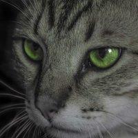 Зеленые глаза :: АЛЛА Смирнова