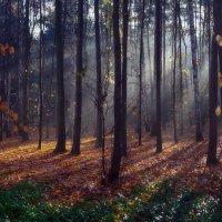 утро в осеннем лесу :: юрий иванов
