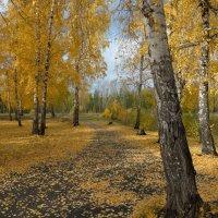 парк :: Елена Осинцева