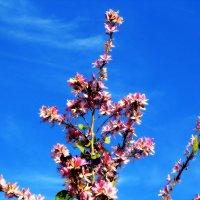 Магнолия цветет! :: Натали Акшинцева