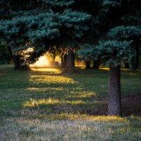 Солнце садится :: Stanislav K