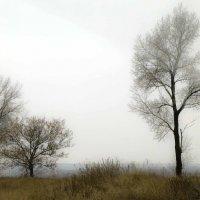 Туман :: Татьяна