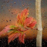 и всплакнула осень золотым дождём... :: Lena