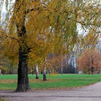 Осень,ветер... :: Вера (makivera)