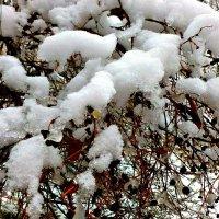 Снег ноября :: galina tihonova