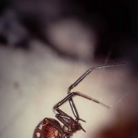lost spider :: Алексей Мощенков