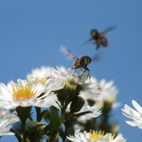 Пчёлы? :: Полина -