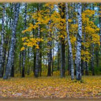 Осень :: Олег Семенцов