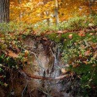 Где то в лесу :: Johann Lorenz