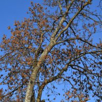 Небо ноября. :: zoja
