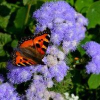 Бабочка :: Вера Андреева