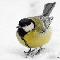 Какая-то  птичка! :: A. SMIRNOV