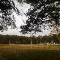 Стадион в лесу Белая Дача Люберецкий район. :: Ольга Кривых