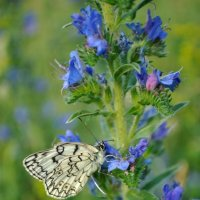 Бабочка :: Анастасия Крупкина