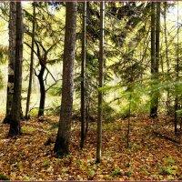 Осенний лес играет красками.. :: Любовь Чунарёва