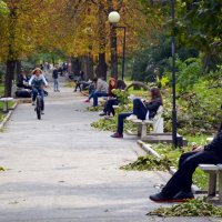 Парк после бури :: Владимир Болдырев