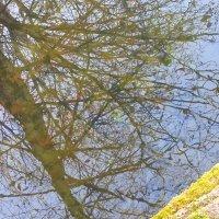 отражение в воде :: Marina