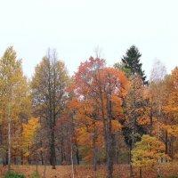 Осеннее озеро :: Евгения Кирильченко