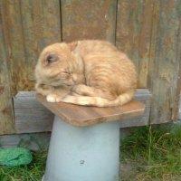 Рыжий кот :: Виктор Елисеев